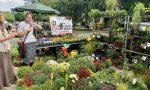 Izuzetna ponuda na ovogodišnjem Jesenjem festivalu cveća i ručnih radova u Kuli